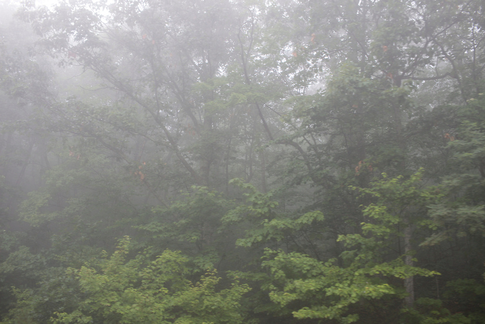 The foggy woods of West Virginia.