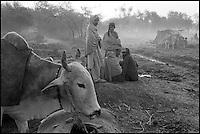 Pakistan, Balouchistan, Foire aux bestiaux de Sibi. // Pakistan, Balouchistan, Sibi Mela.