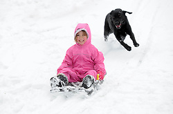 Lucy Patten  (5) on a sledge  in Cambridge chased by her dog Ruby as unseasonal snowfall blankets the country, UK, March 24 2013.  Photo by Matthew Power / i-Images...