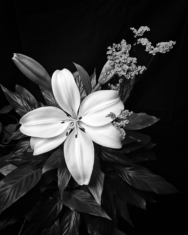 A lily flower in portrait.