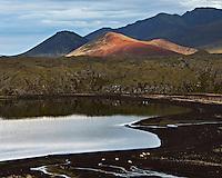 Lake Selvallavatn at Snæfellsnes Peninsula, Iceland. Swans and sheep by the lake. Kothraunskúla and Seljafell in background. Við Selvallavatn á Snæfellsnesi. Svanir við vatnið og sauðfé á beit. Kothraunskúla og Seljafell í baksýn.