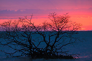 Sunset in the Gulf of Mexico behind a solitary mangrove tree in shallow water off Florida's Gullivan Key.<br />