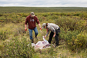 Heidi Anderson and Bernie McGowan field dress a caribou during Heidi's 2019 subsistence hunt in Alaska.