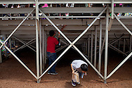 Children play under the bleachers during the pig races.