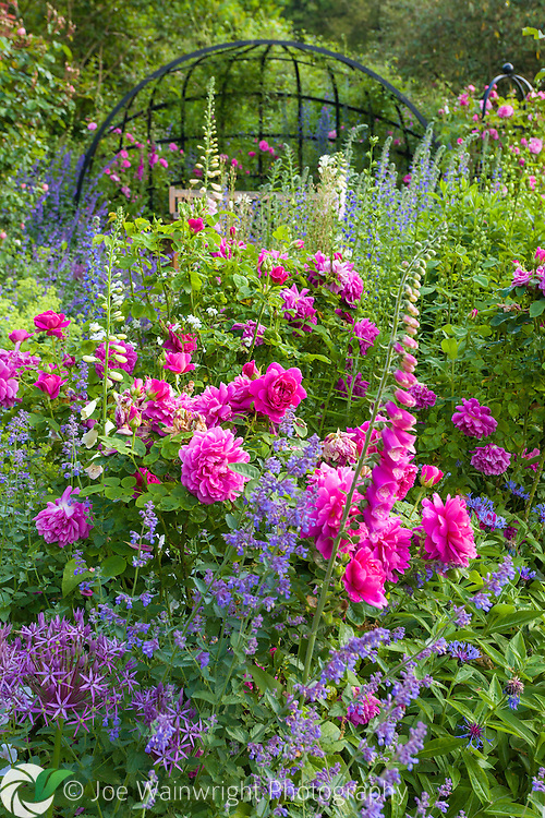 The Rose Walk, filled with fragrant roses and colourful herbaceous plants at Dorothy Clive Garden, Staffordshire. Photographed in June.