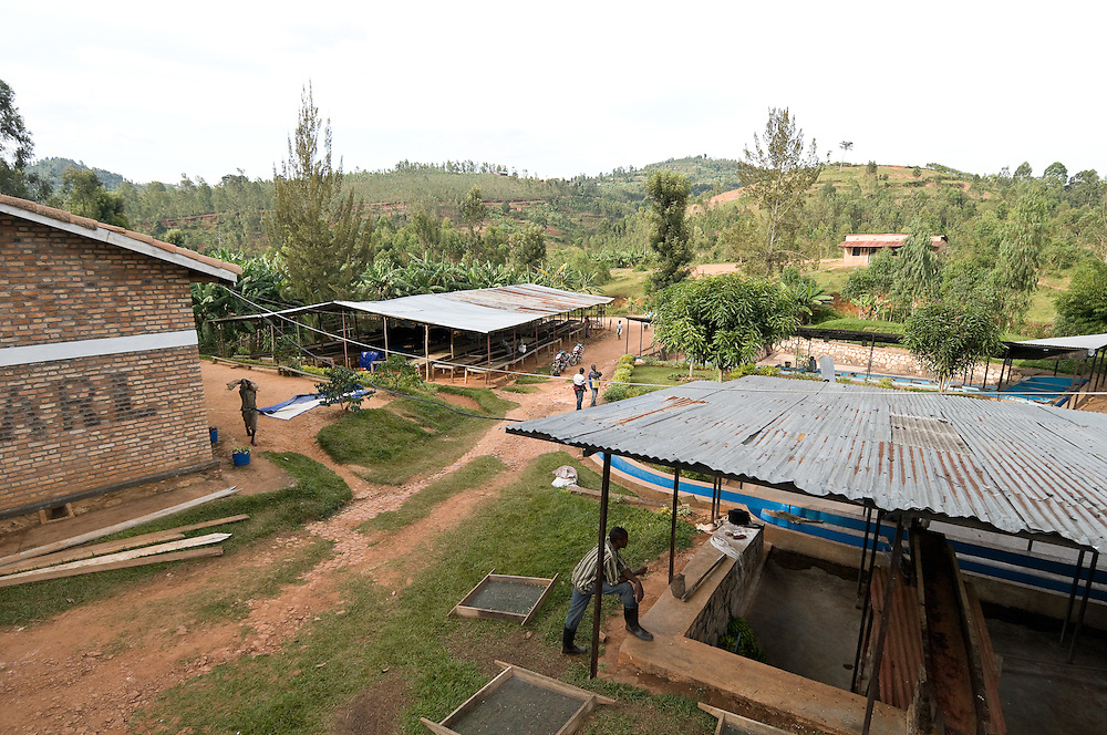 Built in 2000 as one of the first new private coffee washing stations in Rwanda in decades, Cyarumba Washing Station, in Maraba, southern Rwanda, is famous for producing Rwanda's first local brand of specialty coffee, Cafe de Maraba.