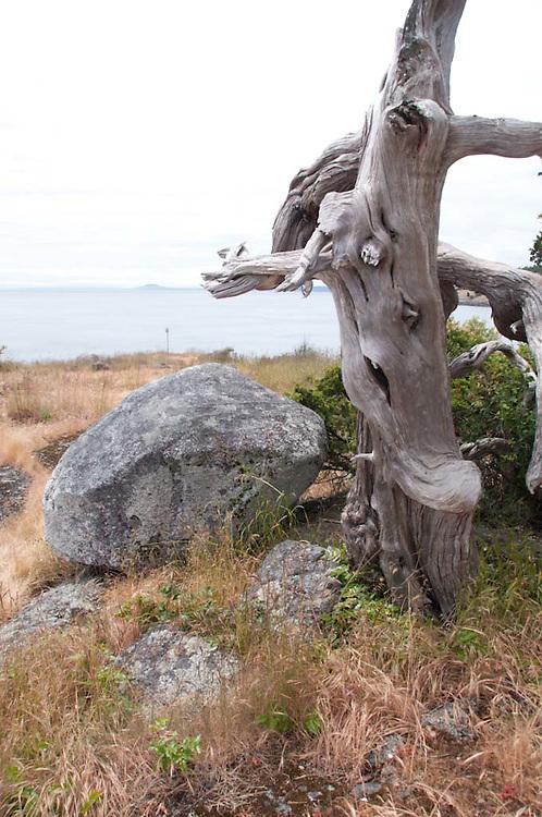 Gnarled Tree and Rocks, Gossip Island, San Juan Islands, Washington, US