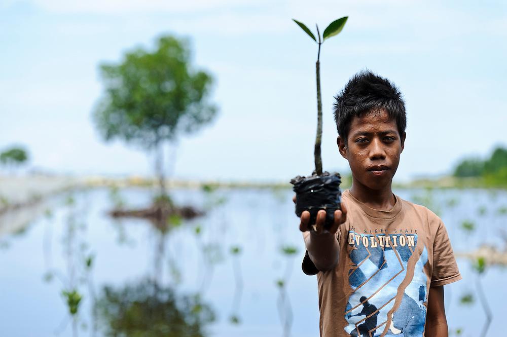 Member of Nature Awareness Group planting seedlings in a mangrove rehabilitation area, Bangga, Gorontalo, Sulawesi, Indonesia.