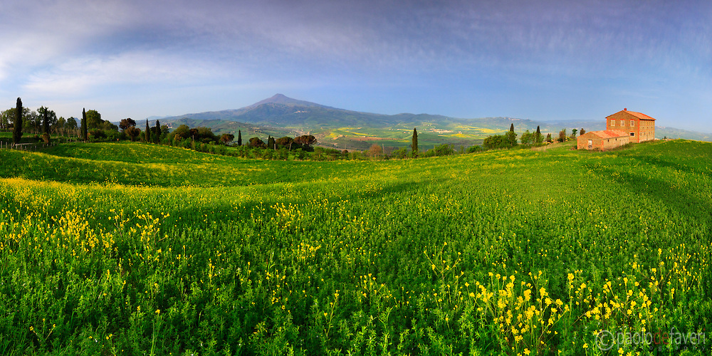 An ealry morning view of the magnificent grazing grasslands dotted with yellow wild flowers placed atop the hills of La Foce, a small village not far from Pienza and Montepulciano in the Orcia Valley, Tuscany. The cone shaped mountain in the background is Mount Amiata, the largest and highest quiescient volcano in Italy. Stitched from nine vertical frames.