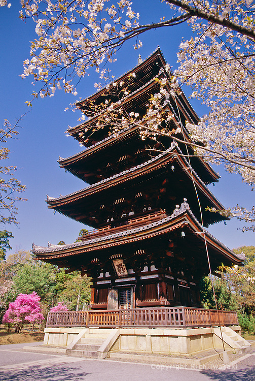 Exterior view of five-story pagoda at Ninnaji (temple) in springtime, Kyoto, Japan