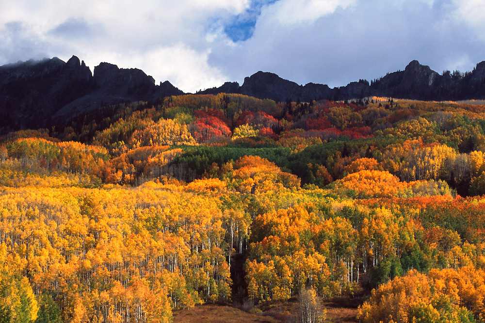 Fall color on Kebler Pass near Crested Butte, Colorado.