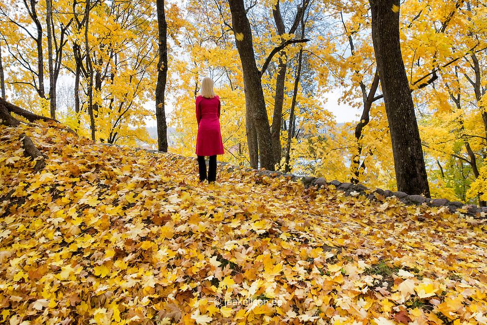 Woman in red coat walking in yellow park covered autumn leaves. Fall, walkway in Tartu, Estonia.