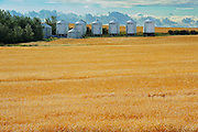 WHeat field and grain bins<br /> Morse<br /> Saskatchewan<br /> Canada
