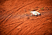 Leaf on the clay court while Day Seventh during The French Open 2013 at Roland Garros Tennis Club in Paris, France.<br /> <br /> France, Paris, June 01, 2013<br /> <br /> Picture also available in RAW (NEF) or TIFF format on special request.<br /> <br /> For editorial use only. Any commercial or promotional use requires permission.<br /> <br /> Mandatory credit:<br /> Photo by &copy; Adam Nurkiewicz / Mediasport