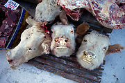 Cow heads and for sale on the Yakutsk outdoor fish and meat market. Yakutsk is a city in the Russian Far East, located about 4 degrees(450 kilometres) south of the Arctic Circle. It is the capital of the Sakha (Yakutia) Republic in Russia with a major port on the Lena River. The city has a population of 264.000 (2009). Yakutsk is one of the coldest cities on Earth. The average monthly winter temperature in January is around -43,2 C. Yakutsk, Jakutsk, Yakutia, Russian Federation, Russia, RUS, 16.01.2010.