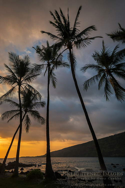 Palm trees at sunset, Manini Beach, Napo'opo'o Beach Park, Big Island of Hawai'i, Hawaii