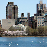 Guggenheim Museum and Jackie Kennedy Onassis Reservoir