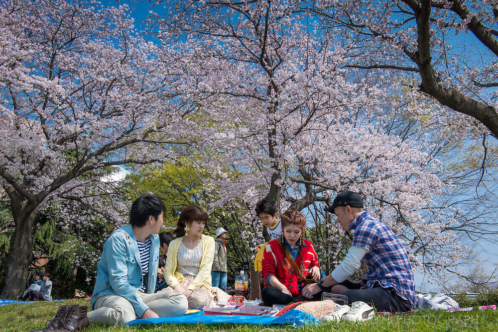 Blue sky and cherry blossom make it the perfect day for Hanami in Hiroshima, in the south of Japan where the blossom starts earlier. The blossom forecast is announced each year by the weather bureau, and is watched carefully by those planning hanami as the blossoms only last a week or two.