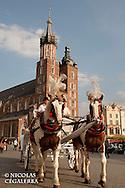 Balade en Calèche devant la Basilique Notre-Dame sur le rynek de Cracovie