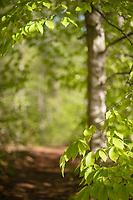 St Paul's Trails in the Spring.  Karen Bobotas / for St Paul's School