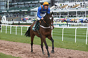 Greensalt and jockey William Eastererby head to the start for the 4.05PM The Randox Health Foxhunters' Steeple Chase (Class 2) 2m 5f during the Grand National Festival Week at Aintree, Liverpool, United Kingdom on 4 April 2019.