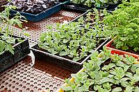 VORTEM MULLUM.  Blue acres krijgt de Agrofoodpluim in de maand mei, als inspiratiebron voor innovatieve ondernemers in de agrofoodsector in Brabant. Jos Hakkennes ontvangt de prijs uit handen van gedeputeerde Anne-Marie Spierings.<br /> <br /> Foto Wim Hollemans