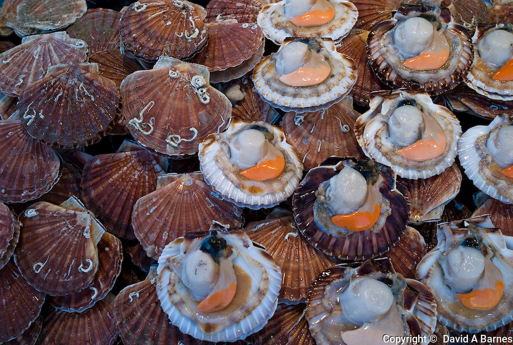 Coquilles St Jacques, Trouville fish market, Calvados, Basse Normandy, France