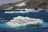 Adelie Penguins on icebergs in the vicinity of Heroina Island, Danger Islands, Weddell Sea