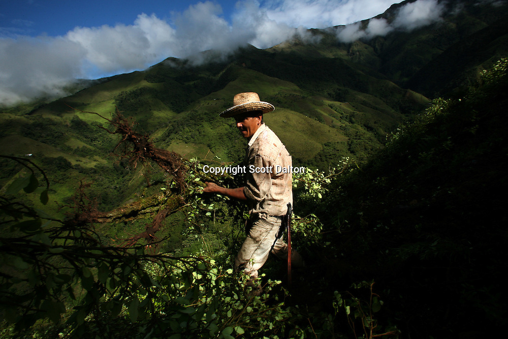 A coca farmer clears his field of coca plants that were manually eradicated by workers hired by the Colombian government, in La Via Alta, in a remote area of the southern Colombian state of Nariño, on Friday, June 22, 2007. (Photo/Scott Dalton)