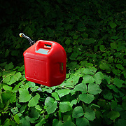 Photograph of a red gas can floating over field of green leaves.