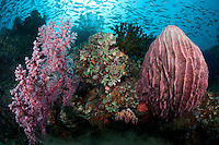 Reef Packed with Soft Corals, Sponges, and Reef Fish<br /> <br /> shot in Indonesia