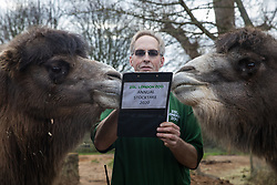 London, UK. 2 January, 2020. Zookeeper Mick Tiley records Bactrian camels during the annual stocktake at ZSL London Zoo. Every mammal, bird, reptile, fish and invertebrate is counted - a total of more than 500 different species - as part of an almost week-long audit required by the Zoo's licence, with the information recorded then shared with other zoos via the Species360 database.