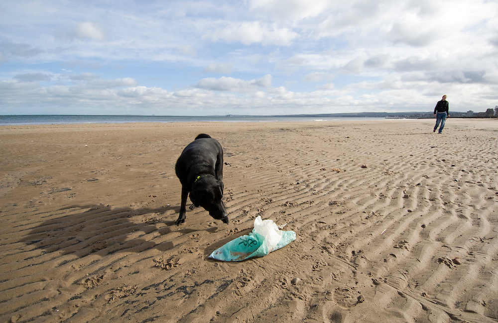 EDINBURGH , UNITED KINGDOM - MARCH 07: Plastic carrier bags on the beaches around Edinburgh and in the city gardens. The Prime Minister Gordon Brown has stated that he will force retailers to help reduce the use of plastic bags if they do not do so voluntarily.