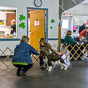 The 2014 WESSA Funmatch.  The event took place at the Western Waukesha Dog Training Club, in  Ixonia, WI.  Photography by Melody Carranza.