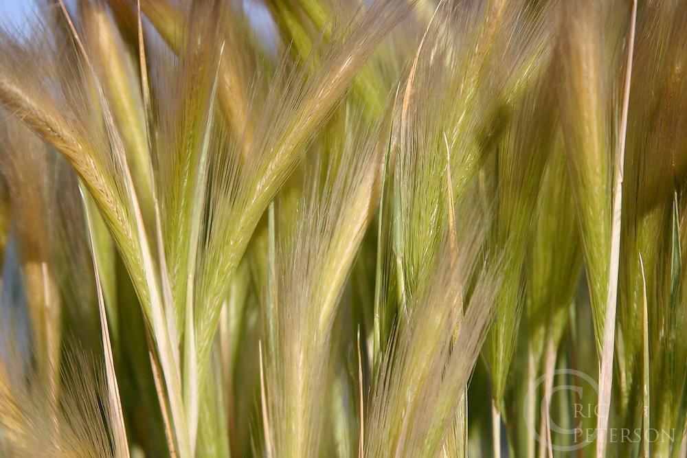 close up of beach grass
