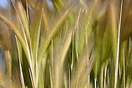 close up of beach grass