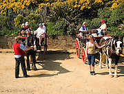 Tourists enjoy a ride in horse and carriage, Island of Sark, Channel Islands, Great Britain