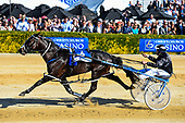 171114 NZ Trotting Cup Day
