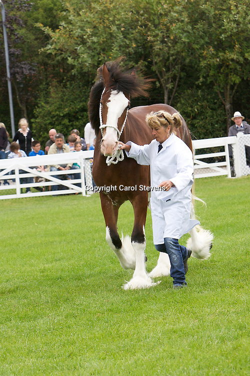Clydesdale Horses at The Great Yorkshire Show 2011