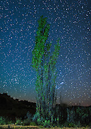 Lone tree and stars in Namaqualand in South Africa's Northern Cape Province.