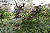 Mediterranean Garden 799