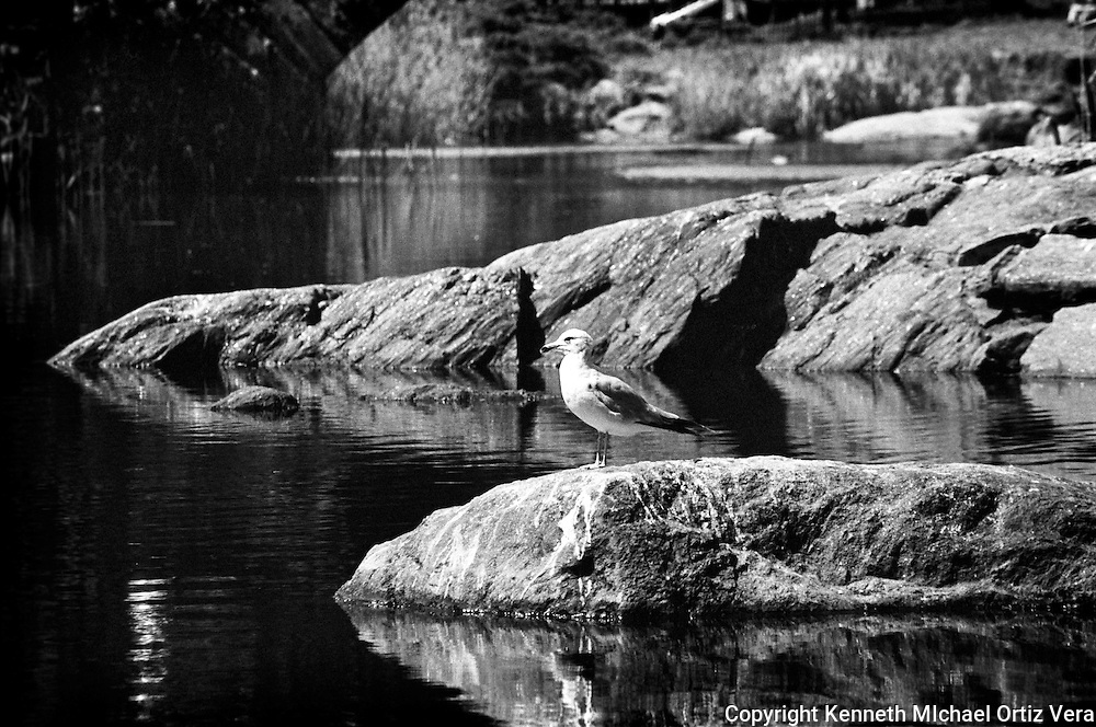 Bird on a Rock, Central Park, New York