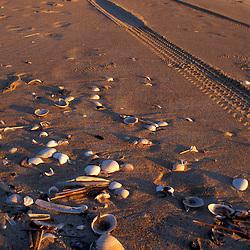 Parker NWR. Beach. Seashells & tire tracks.  Plum Island, MA.