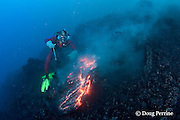 diver Bud Turpin and erupting pillow lava at underwater eruption of Kilauea Volcano, Hawaii Island ( the Big Island ), Hawaii, U.S.A. ( Central Pacific Ocean ) MR 381