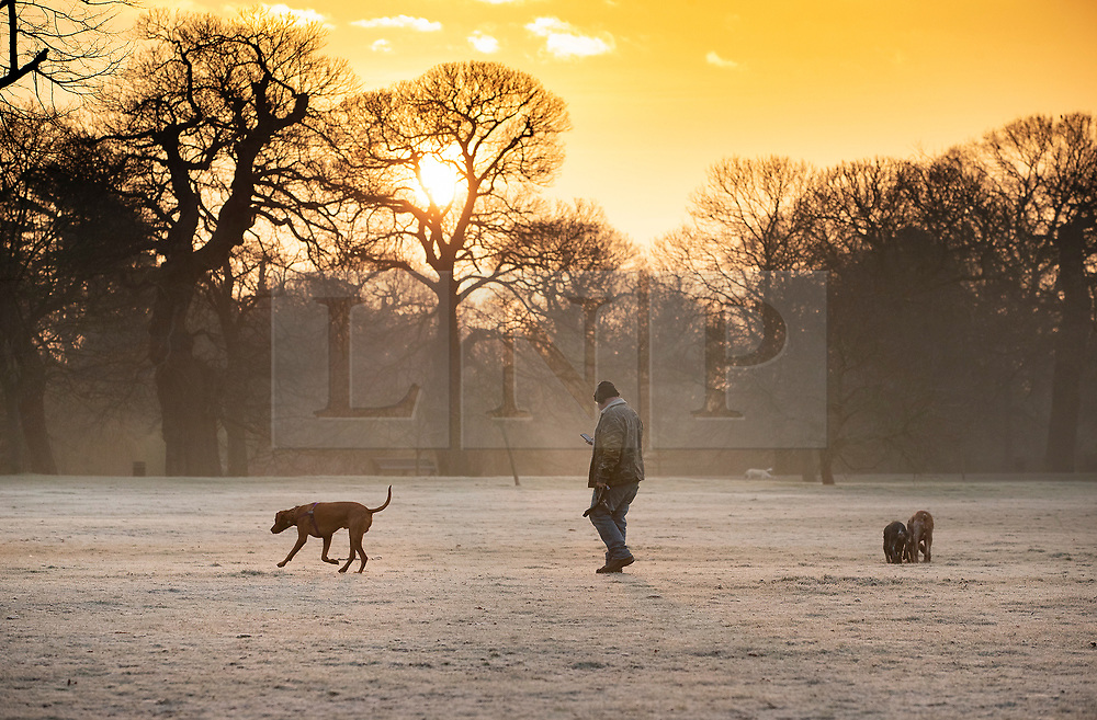 © Licensed to London News Pictures. 21/01/2019. London, UK. A man walks with his dogs across frozen ground in Greenwich Park after the lunar eclipse ended at dawn. Photo credit: Peter Macdiarmid/LNP