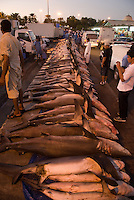 Sharks at the Dubai fish market. Dubai, one of the seven emirates and the most populous of the United Arab Emirates sits on the southern coast of the Persian gulf.