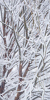 Frost covered branches in the Heber Valley of Utah create an interesting abstract image.