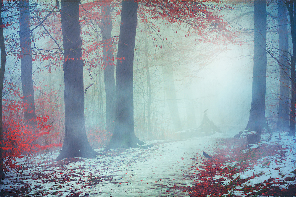 Winter woodlands in mist - textured photograph<br />