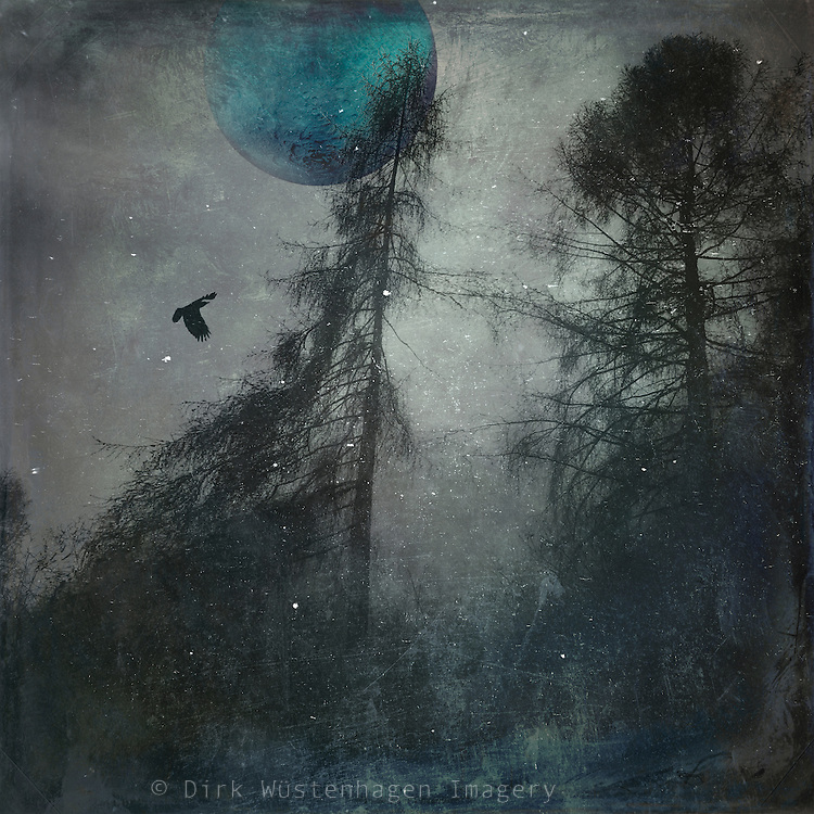 Surreal composing made with my own photographs<br /> Prints &amp; more: https://society6.com/product/blue-moon-wilderness_print#1=45<br /> REDBUBBLE Prints. http://www.redbubble.com/people/dyrkwyst/works/21253230-blue-moon-wilderness