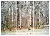 Forest Series Multi-panel Prints